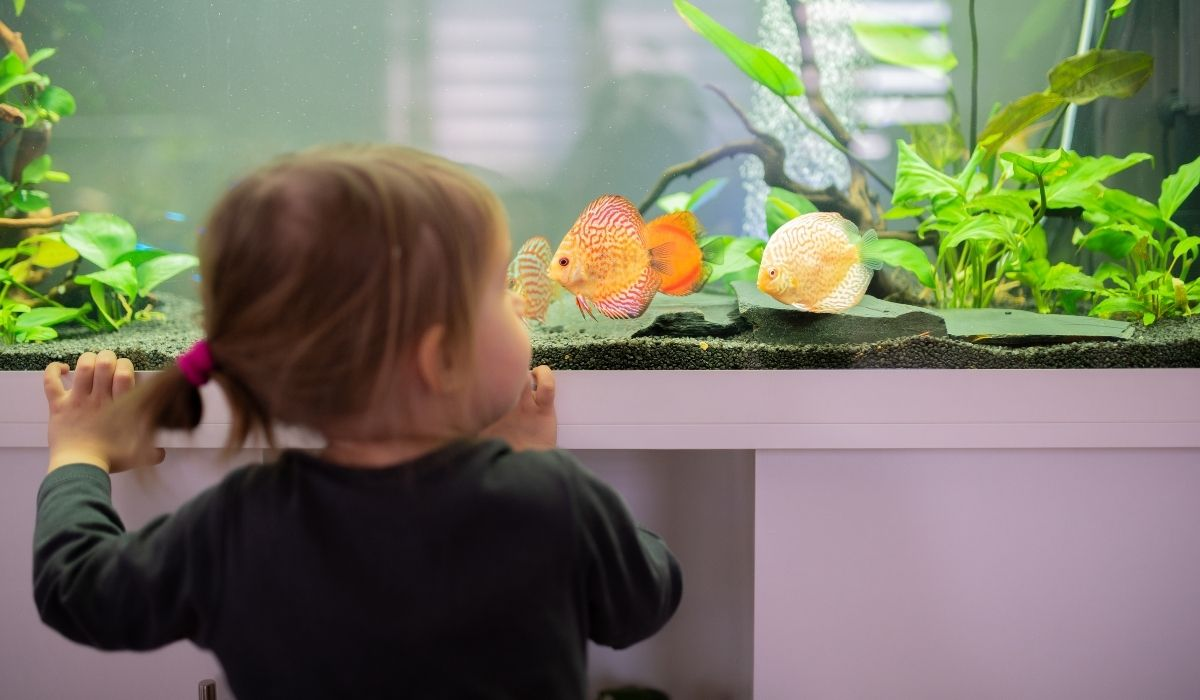 little girl looking at some fishes in the fish tank at their apartment