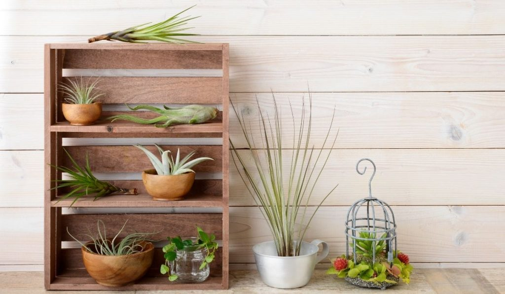 different air plants at home