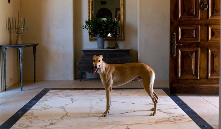 Are Greyhounds Good Apartment Dogs?