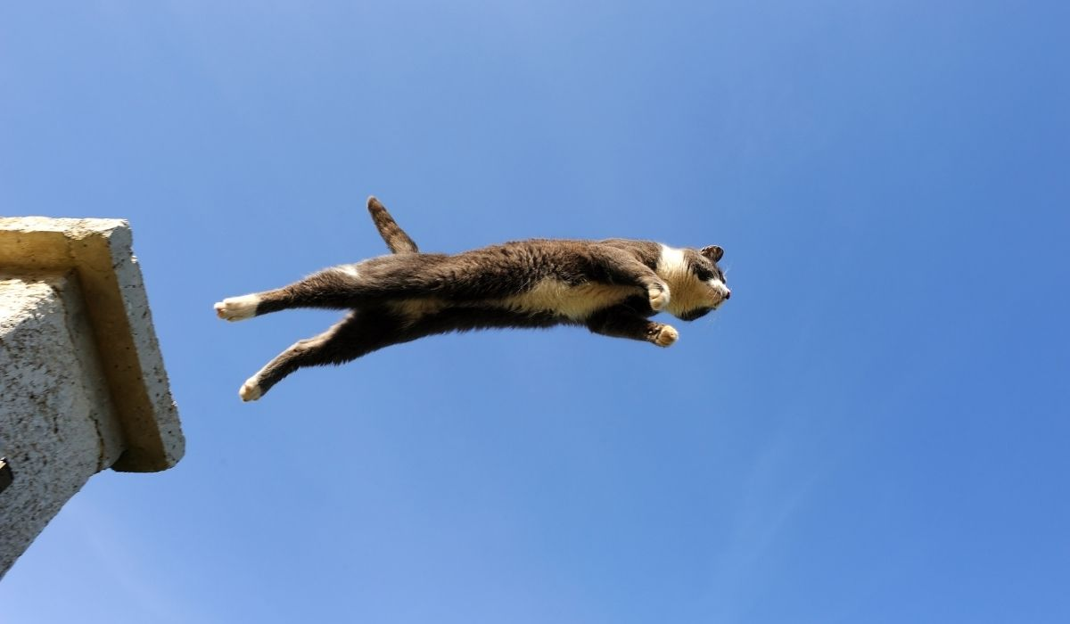 cat jumping from a post